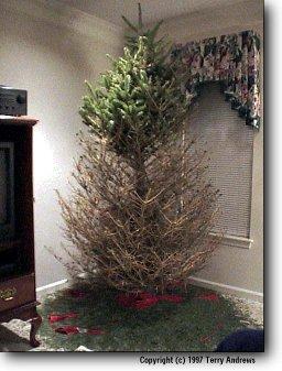D U M B S O U T H E R N E R A Christmas Tradition